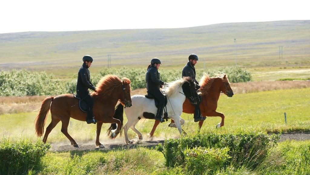 Horse Riding Tour North - 1 hour